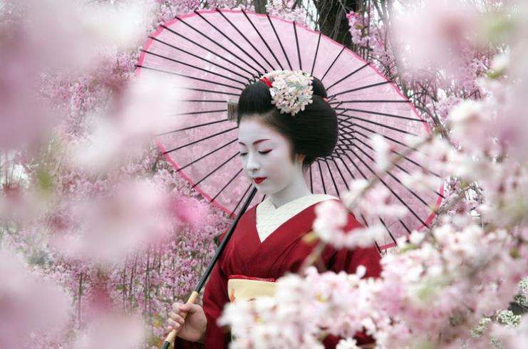 праздник сакуры в Японии