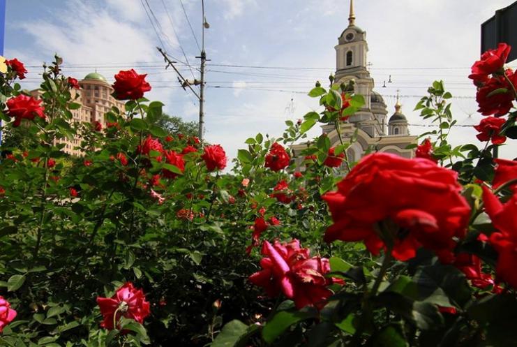 донецк в розах