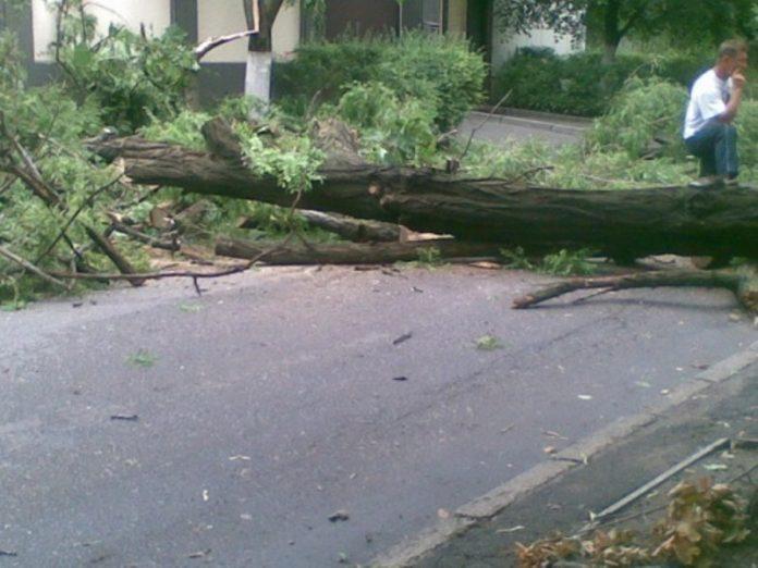 В Славянске на Центральной улице в результате непогоды упало дерево