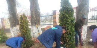 В центре Краматорска коммунальные службы решили провести инвентаризацию зеленых насаждений