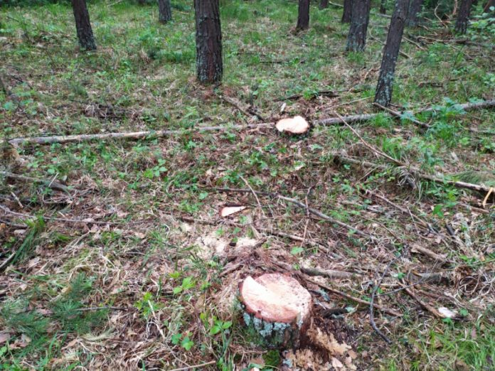 В Краматорске задержаны трое мужчин по подозрению в незаконной вырубке леса