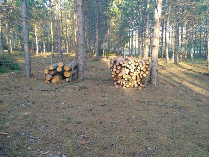 В Славянском районе полицейские задержали группу лиц, осуществлявших вырубку леса