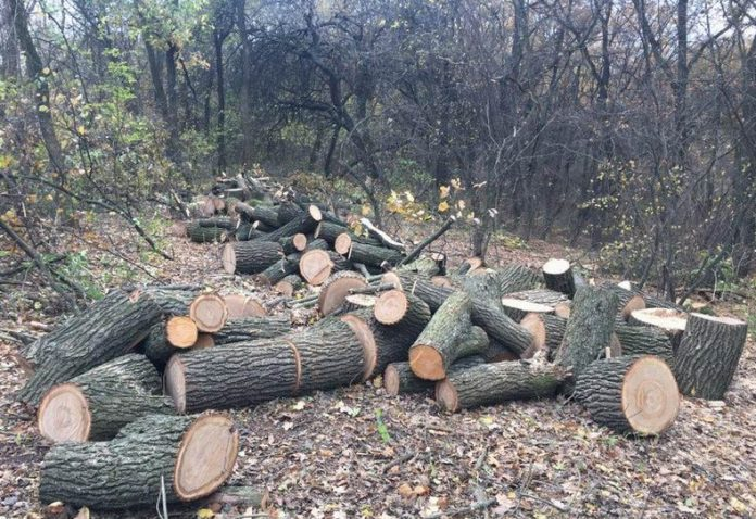 Возле Славянска правоохранители задержали группу, которые занимались незаконной вырубкой леса