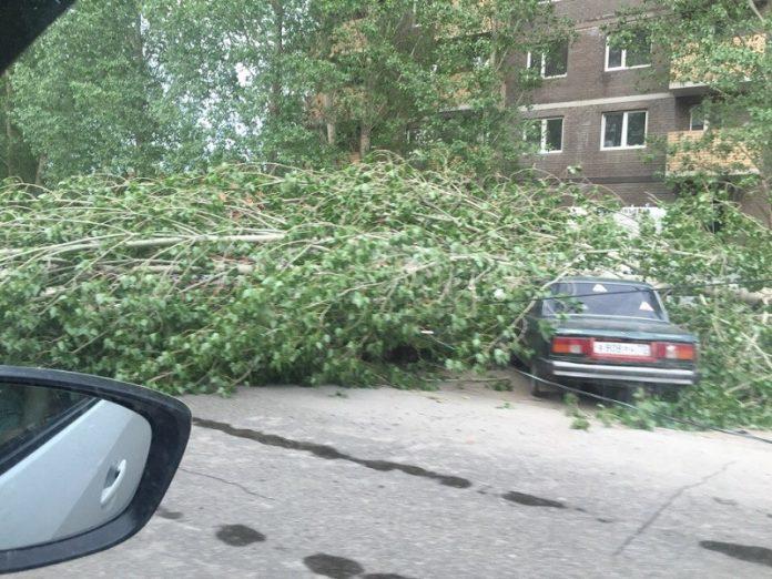 В Центрольно-Городском районе Горловки дерево обрушилось на автомобиль